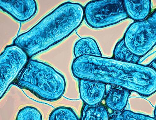 Correcciones a la Norma UNE 100030:2017 sobre control de Legionella