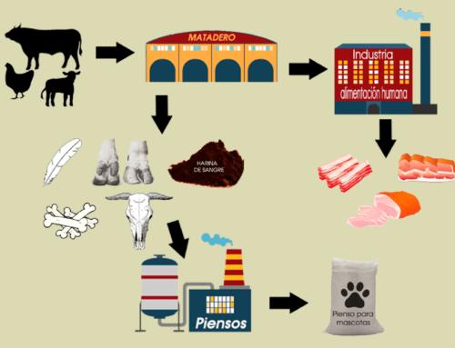 Modificación de las normas sanitarias que aplican a la trazabilidad de determinados subproductos animales y productos derivados
