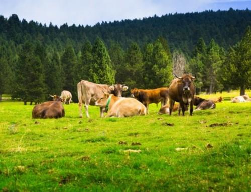 Registro de operadores para exportación de productos de origen animal a Reino Unido a partir del 1 de octubre de 2021