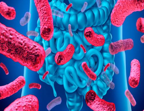 La EFSA aprueba la primera bacteria beneficiosa de próxima generación